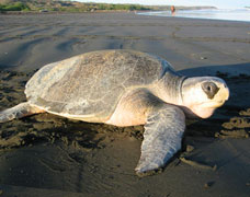 Gopalpur on Sea with Rideley Turtle Tours