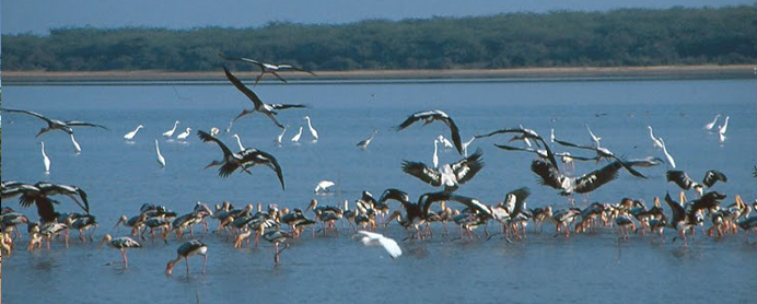 little Tibet & Birds Watching Tour Package Orissa